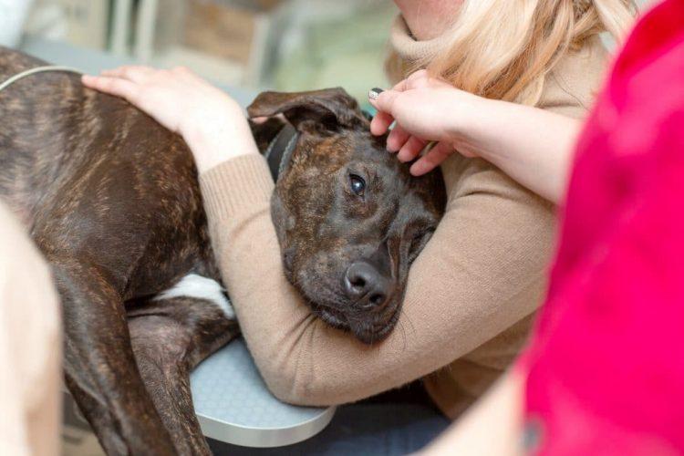 types de maladies possibles pour un chien